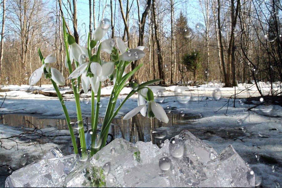 ruchi-vesennie-i-reki-7.orig
